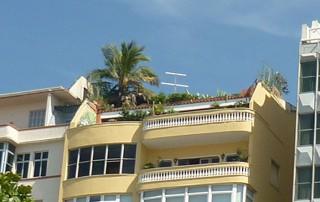 techos-verdes-bsas2